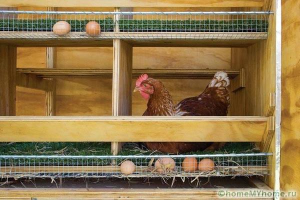 Носачки за кокошки гнезда