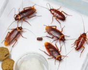 Най-ефективните лекарства за хлебарки в апартамента